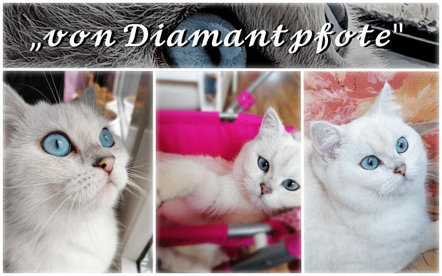 Cattery von Diamantpfote